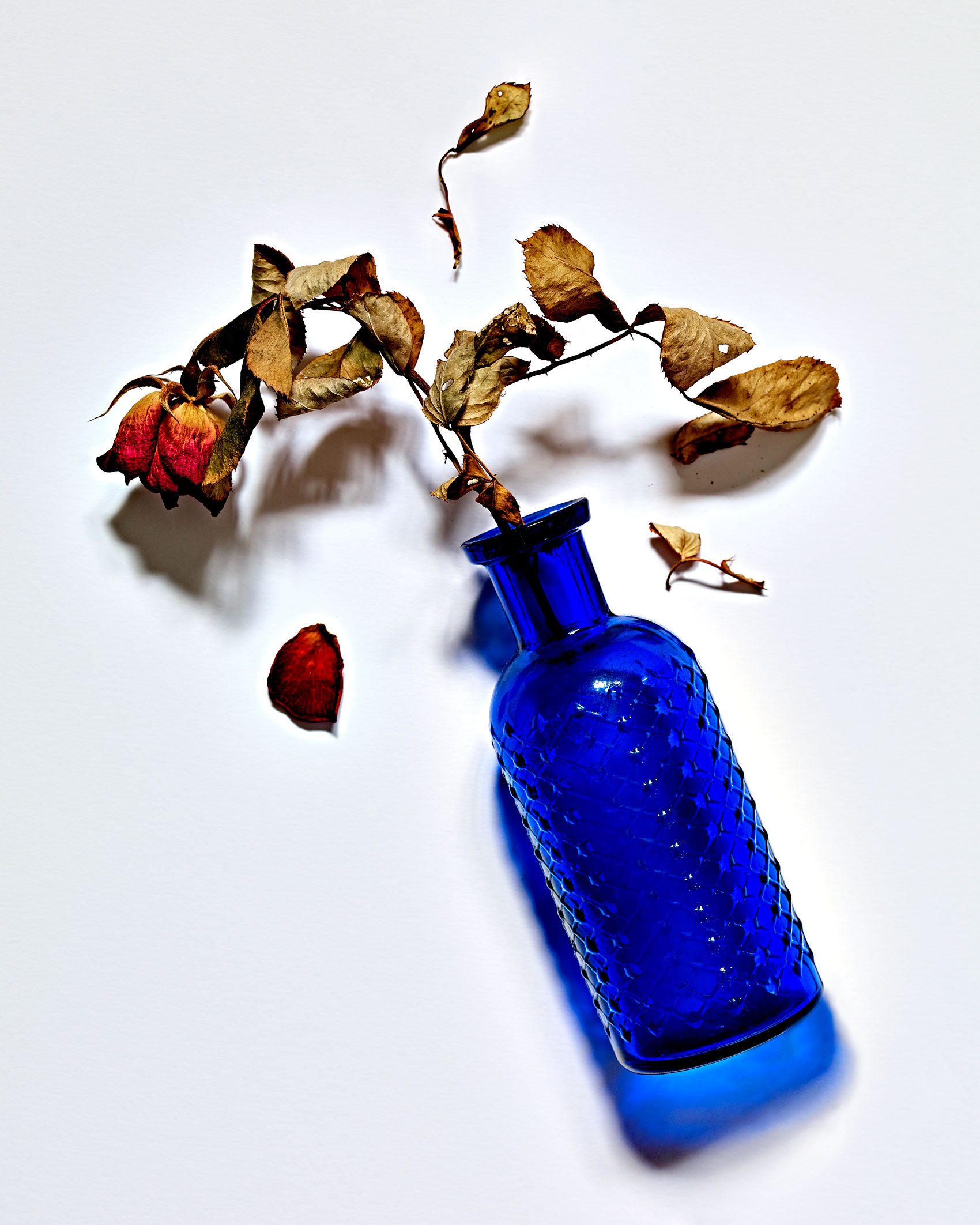 Dried Rose in a Blue Bottle